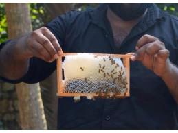 உலக தேனீக்கள் தினம் -World Bee Day